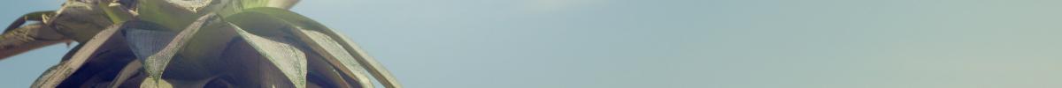Sommerudsalg danmark